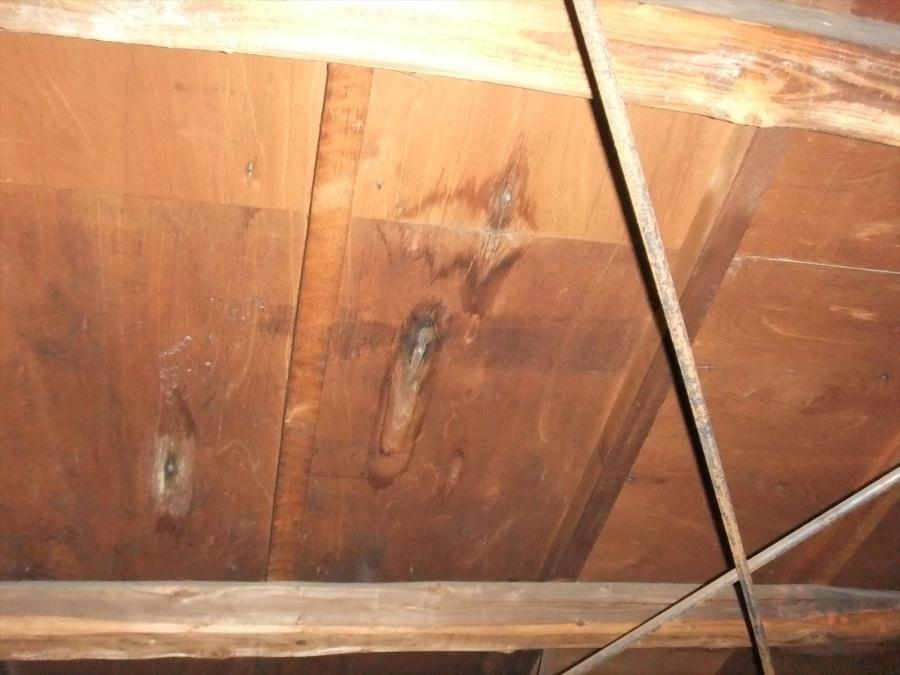 屋根野地板