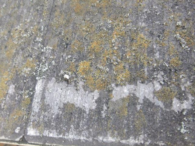 カラーベスト 現地調査 コケ 塗膜の剥離