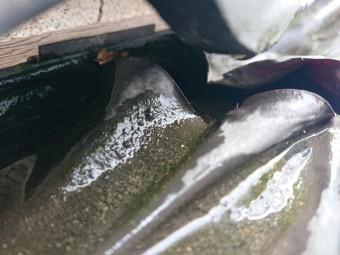 雨樋の劣化により交換