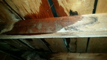 雨漏れ屋根裏