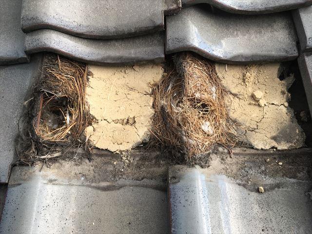 瓦屋根 雀の巣