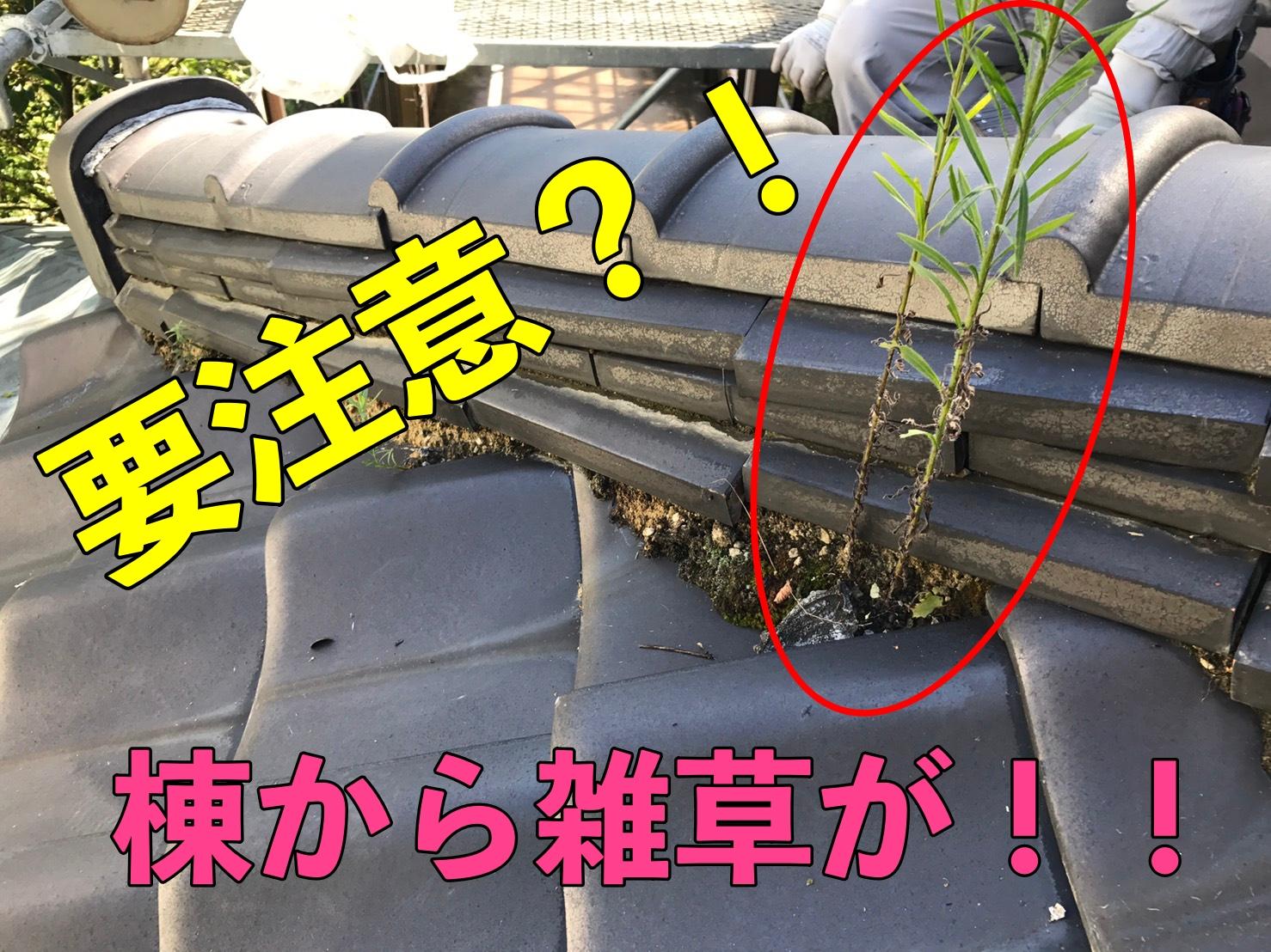 名古屋市千種区で屋根修理 棟から植物が生えていたら要注意!