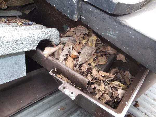 樋の中に大量の枯れ葉が