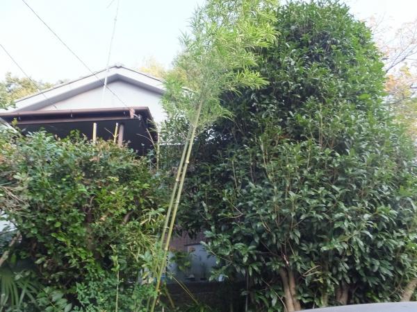周りが木々に囲まれた家