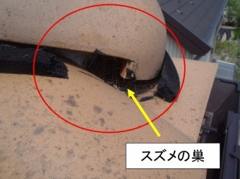 屋根スズメ