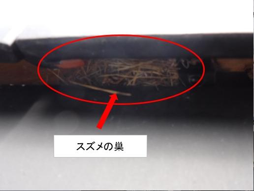 屋根にスズメの巣